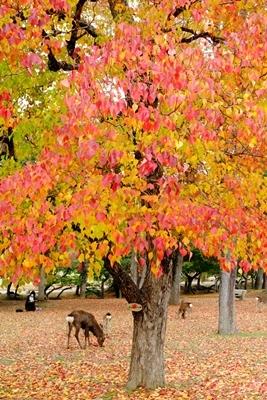 新しい広角レンズで奈良の紅葉を撮ってきました♪_b0194861_21552106.jpg