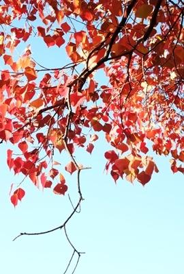 新しい広角レンズで奈良の紅葉を撮ってきました♪_b0194861_21564239.jpg