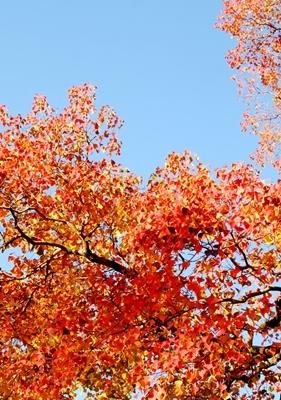 新しい広角レンズで奈良の紅葉を撮ってきました♪_b0194861_21572394.jpg