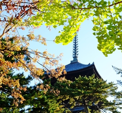 新しい広角レンズで奈良の紅葉を撮ってきました♪_b0194861_21581823.jpg