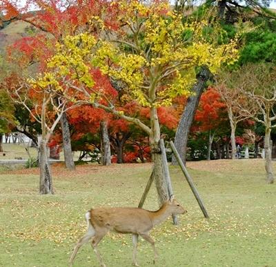 新しい広角レンズで奈良の紅葉を撮ってきました♪_b0194861_23585488.jpg