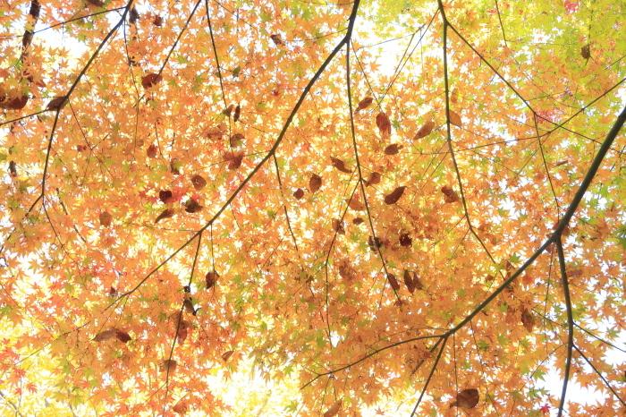 瑞宝寺公園2020_b0043304_01010686.jpg