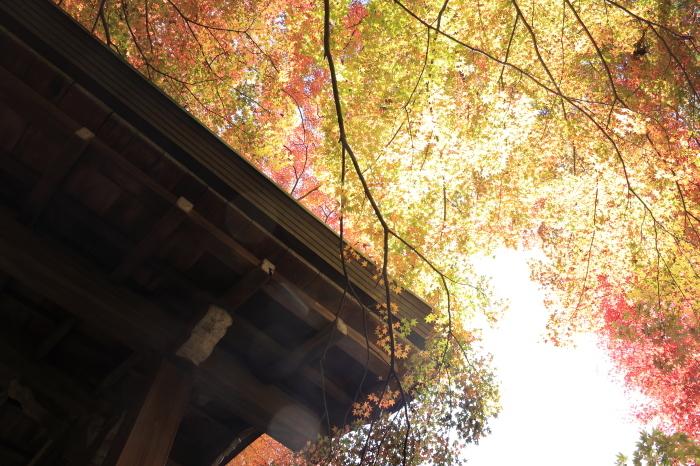 瑞宝寺公園2020_b0043304_01013129.jpg
