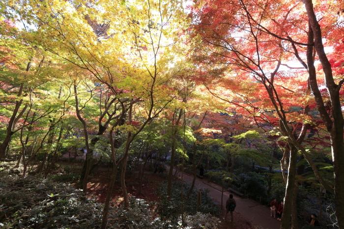 瑞宝寺公園2020_b0043304_01013700.jpg