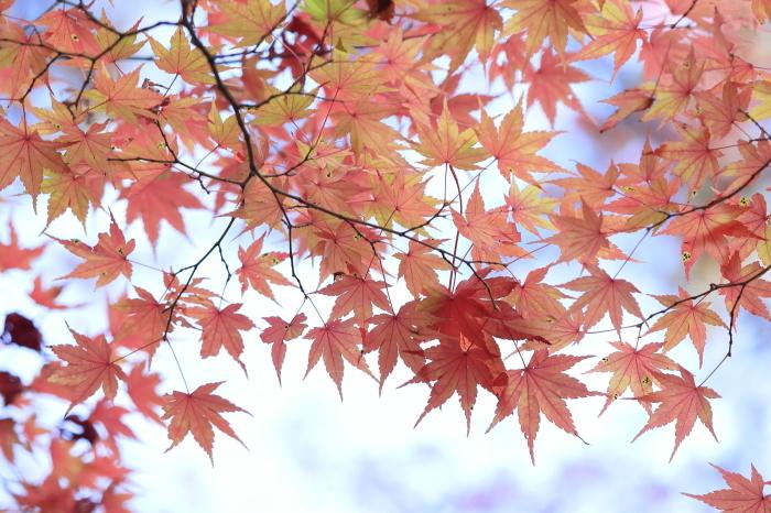 瑞宝寺公園2020_b0043304_01020319.jpg