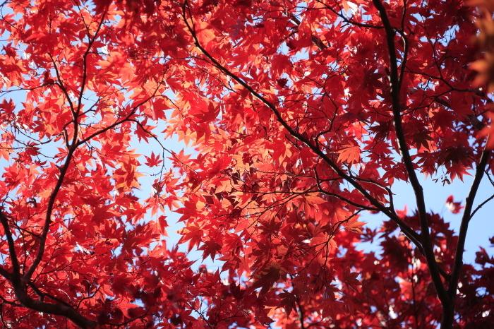瑞宝寺公園2020_b0043304_01021411.jpg