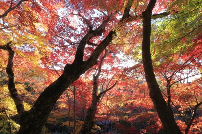 瑞宝寺公園2020_b0043304_01024255.jpg