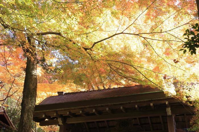瑞宝寺公園2020_b0043304_01390749.jpg