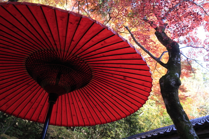 瑞宝寺公園2020_b0043304_01393037.jpg