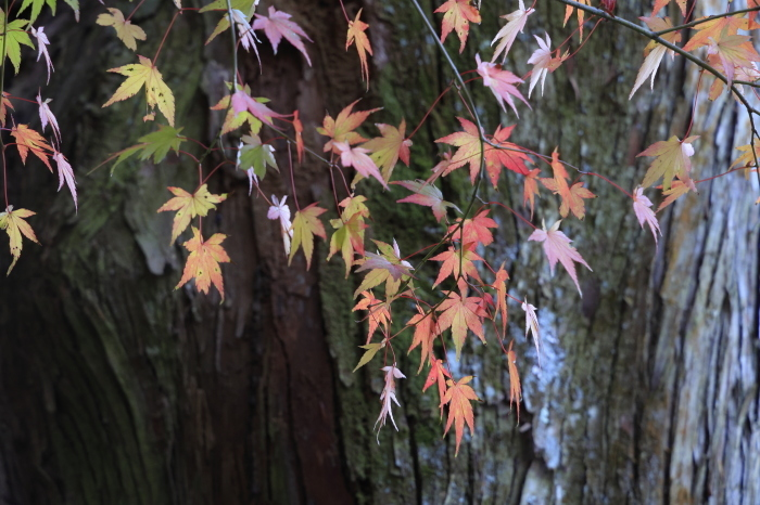 瑞宝寺公園2020_b0043304_01394456.jpg