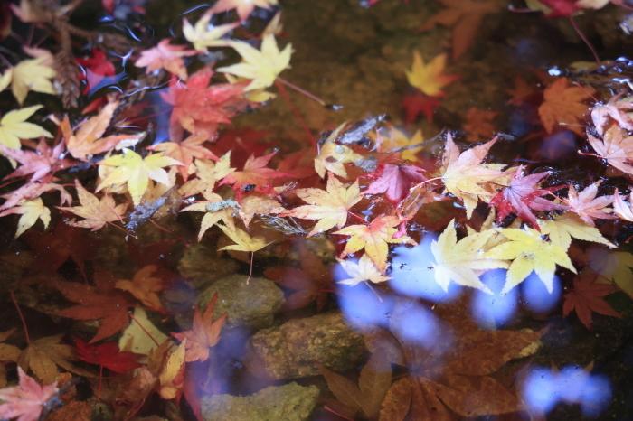 瑞宝寺公園2020_b0043304_01401836.jpg