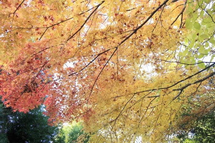 瑞宝寺公園2020_b0043304_01405851.jpg
