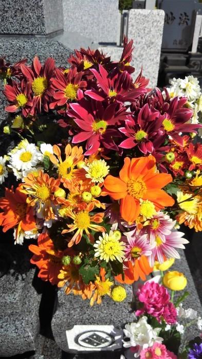 ■Myファーム便り【今菊祭り状態になり 花束にして皆さんにお届けしています♪】_b0033423_21245727.jpg