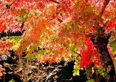 新しい広角レンズで奈良の紅葉を撮ってきました♪_b0194861_07582428.jpg