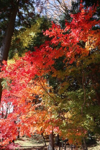 色鮮やかな☆_f0147585_10372507.jpg