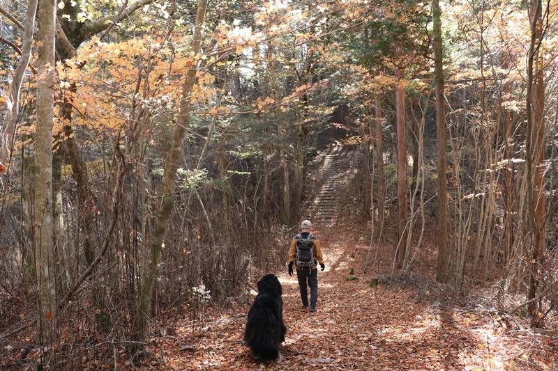 落ち葉の森_b0158390_09191550.jpg