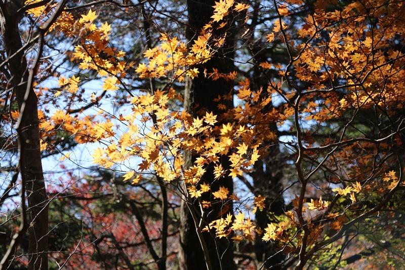 落ち葉の森_b0158390_09192575.jpg
