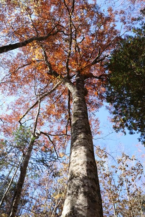 落ち葉の森_b0158390_09201527.jpg
