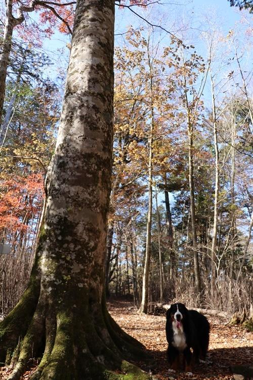 落ち葉の森_b0158390_09202530.jpg