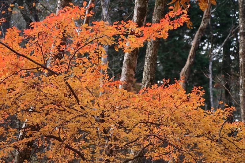 落ち葉の森_b0158390_09203662.jpg