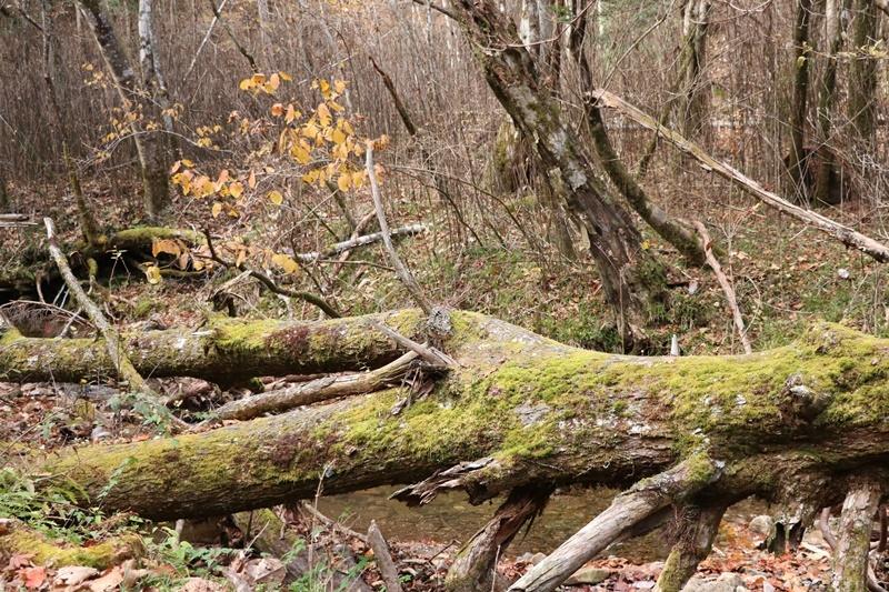 落ち葉の森_b0158390_09204997.jpg