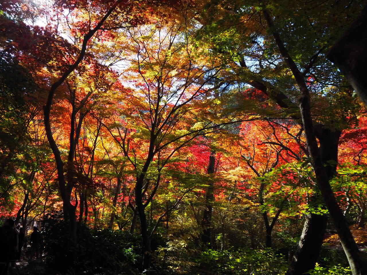瑞宝寺公園_f0370091_00244987.jpg
