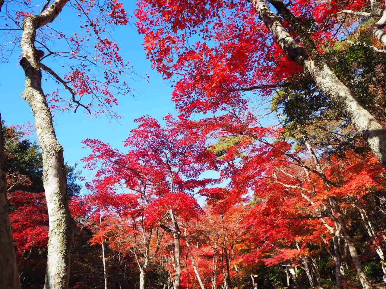 瑞宝寺公園_f0370091_00255827.jpg
