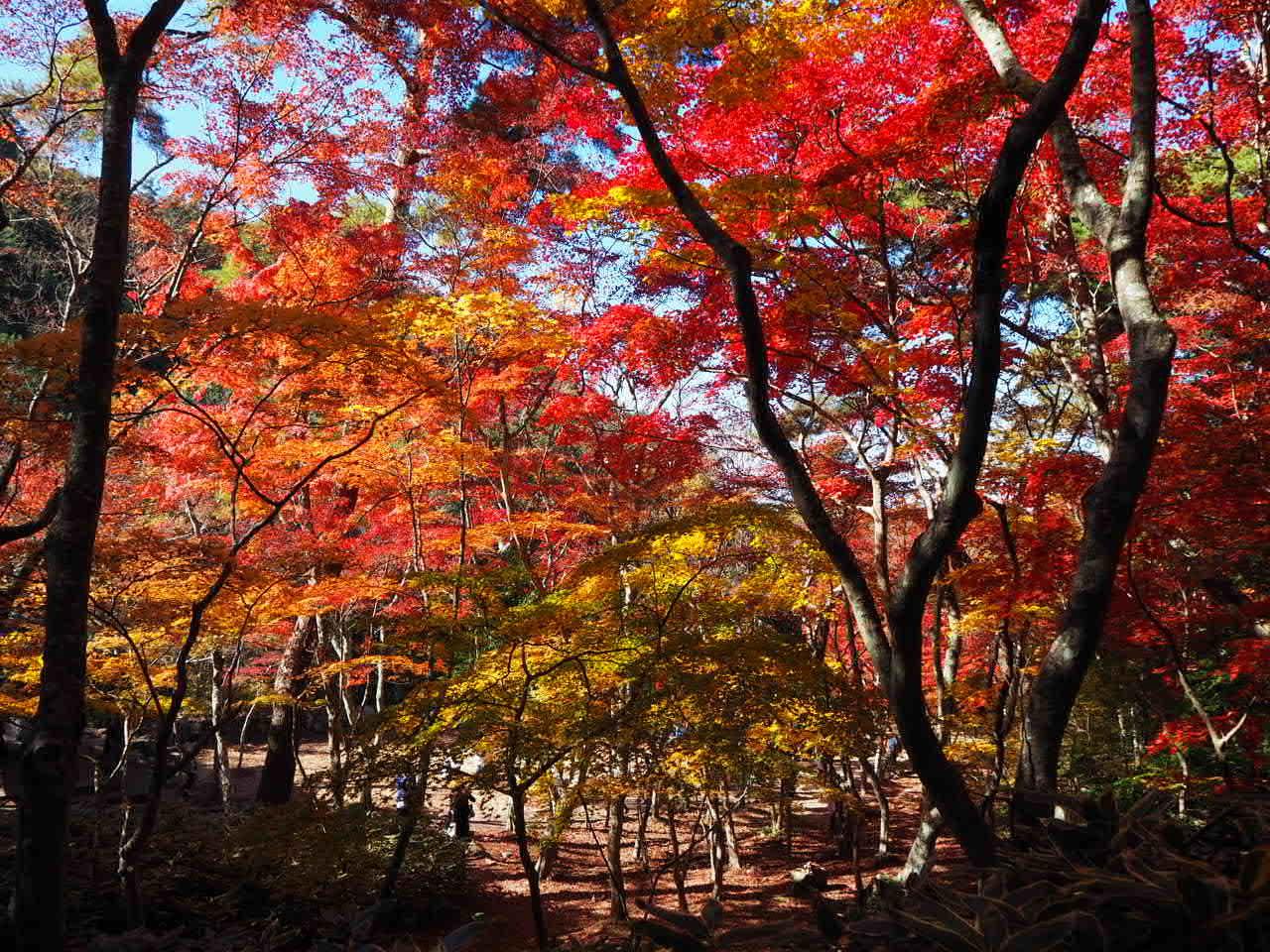 瑞宝寺公園_f0370091_00262227.jpg