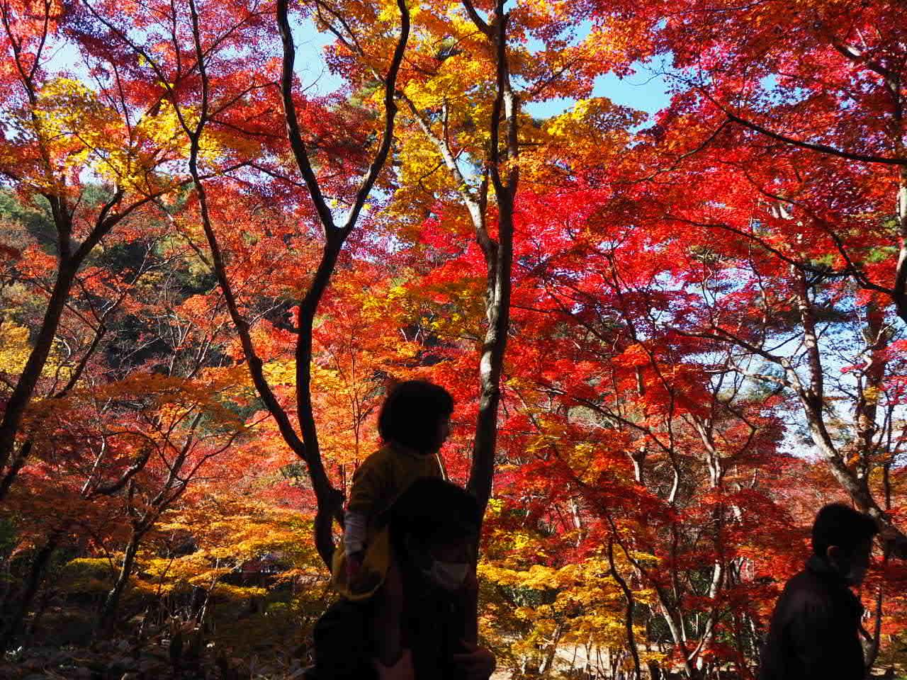瑞宝寺公園_f0370091_00262969.jpg