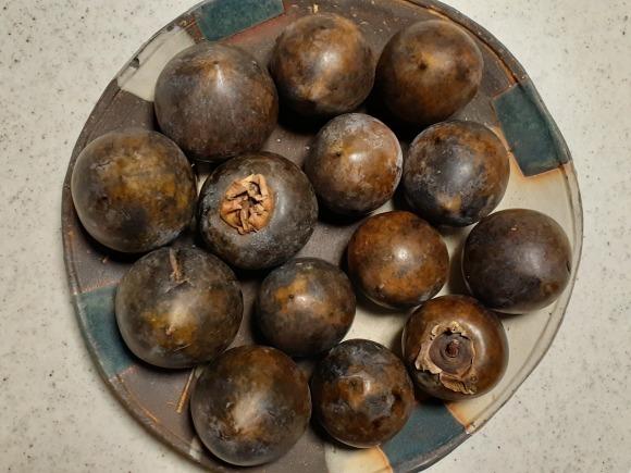 黒実柿(クロミガキ)_a0199297_17454111.jpg