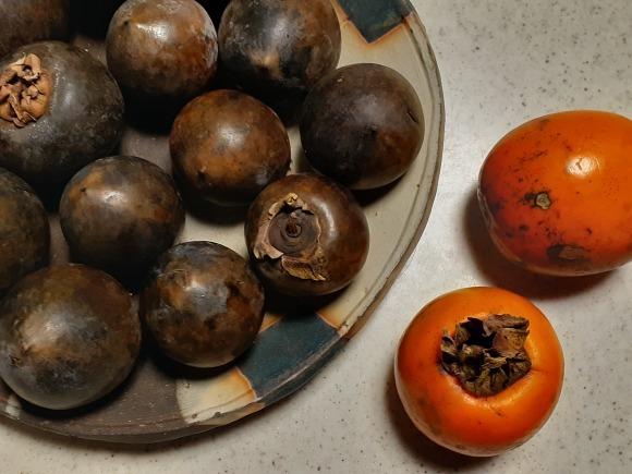 黒実柿(クロミガキ)_a0199297_18055256.jpg