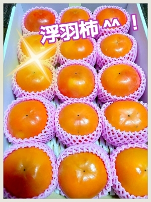 来たぁーーッ 故郷?ガミちゃんの里 浮羽の柿たい!!_b0183113_21250701.jpg