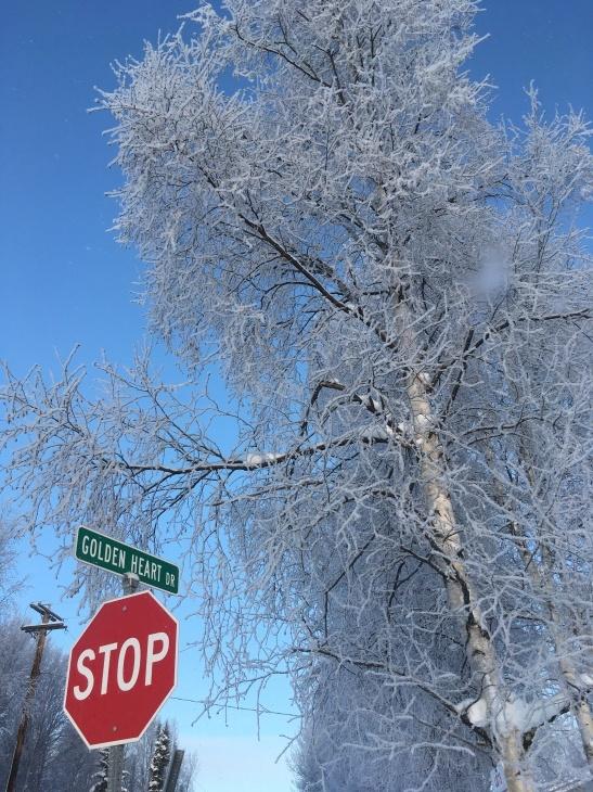 樹氷_b0135948_10124530.jpg