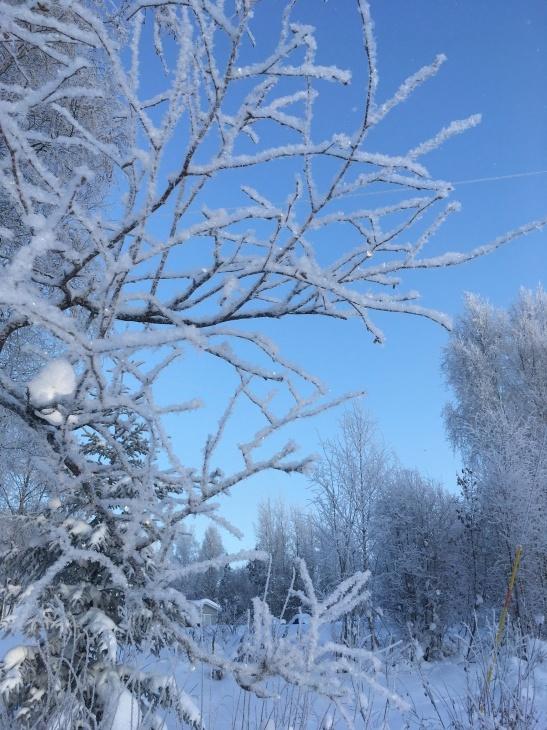 樹氷_b0135948_10125339.jpg