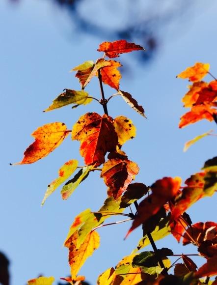 紅葉 。。。 ! !_a0248459_14200923.jpg