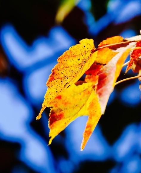 紅葉 。。。 ! !_a0248459_14212157.jpg