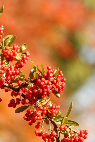 紅葉 。。。 ! !_a0248459_14222851.jpg