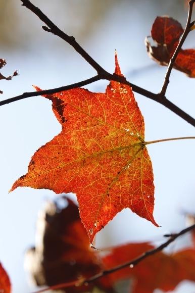 紅葉 。。。 ! !_a0248459_14244984.jpg