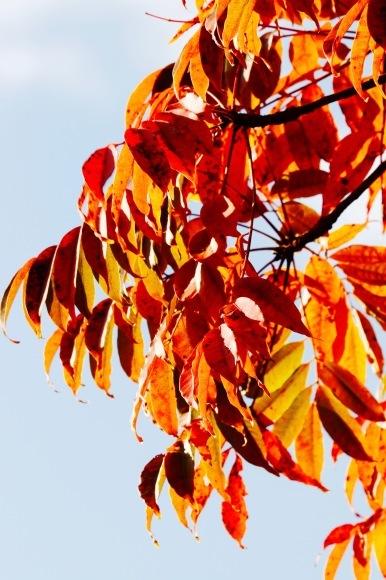 紅葉 。。。 ! !_a0248459_14272842.jpg
