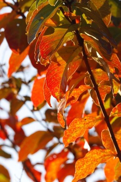 紅葉 。。。 ! !_a0248459_14280564.jpg