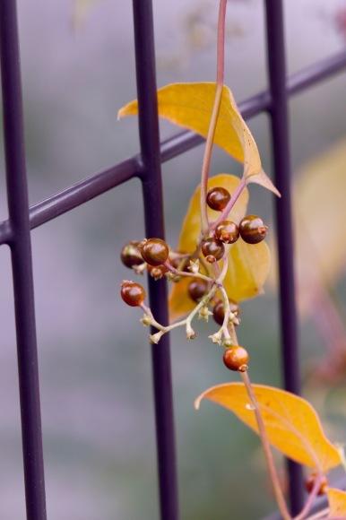 紅葉 。。。 ! !_a0248459_14282975.jpg