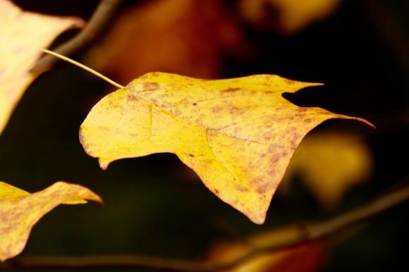 紅葉 。。。 ! !_a0248459_14285979.jpg