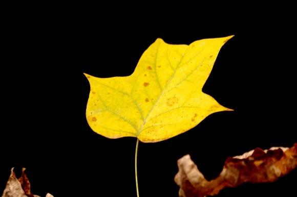 紅葉 。。。 ! !_a0248459_14292636.jpg