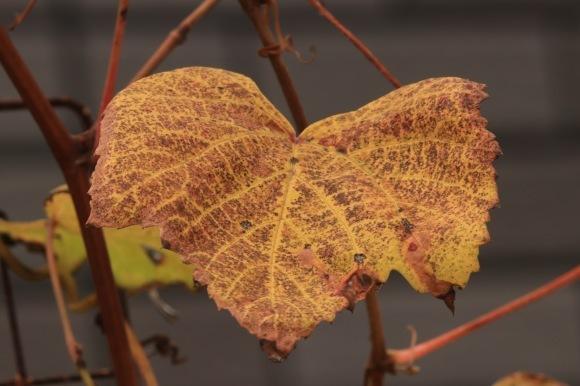 紅葉 。。。 ! !_a0248459_14320424.jpg