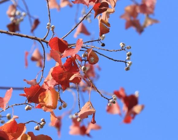 紅葉 。。。 ! !_a0248459_14345179.jpg