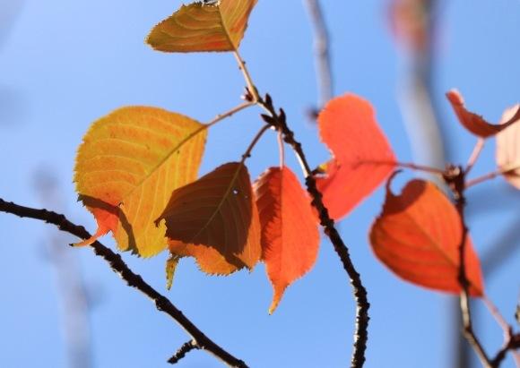 紅葉 。。。 ! !_a0248459_14352078.jpg
