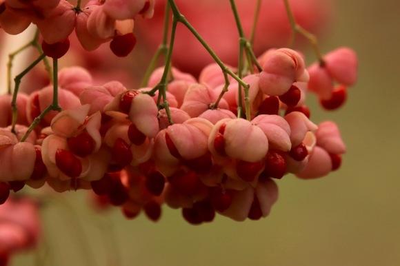紅葉 。。。 ! !_a0248459_14363626.jpg