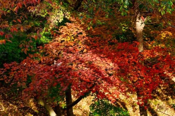 紅葉 。。。 ! !_a0248459_14372303.jpg