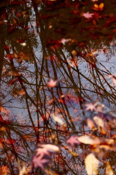 紅葉 。。。 ! !_a0248459_14383661.jpg
