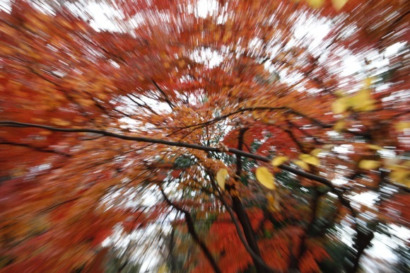 紅葉 。。。 ! !_a0248459_14385984.jpg